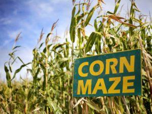 Student Ministries Corn Maze